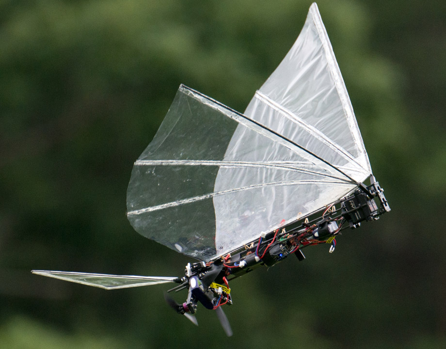 Engineering a Robotic Bird Like No Other