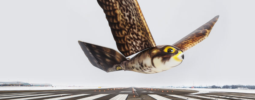 "Flying ""Robirds"" Increase Safety at Airports"